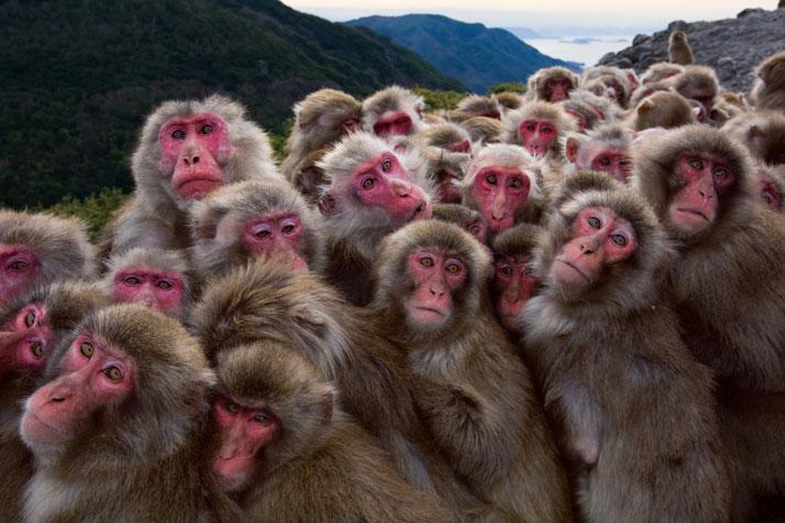 0708-1-monkey-group